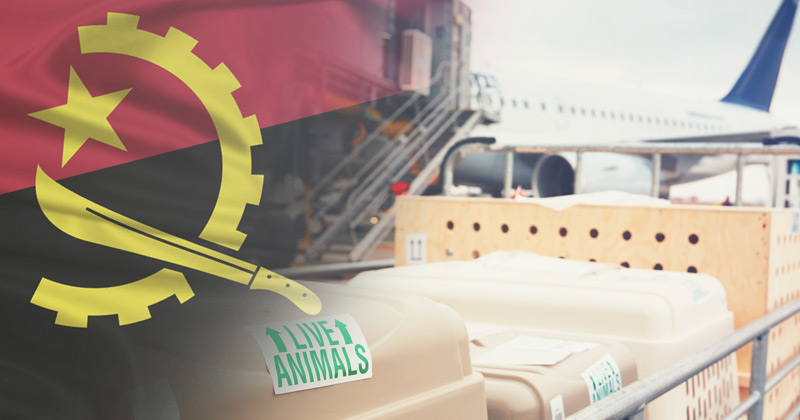 exportação animais angola 02